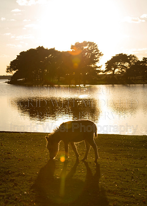 IWM9134 