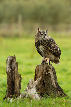 IWM2326 