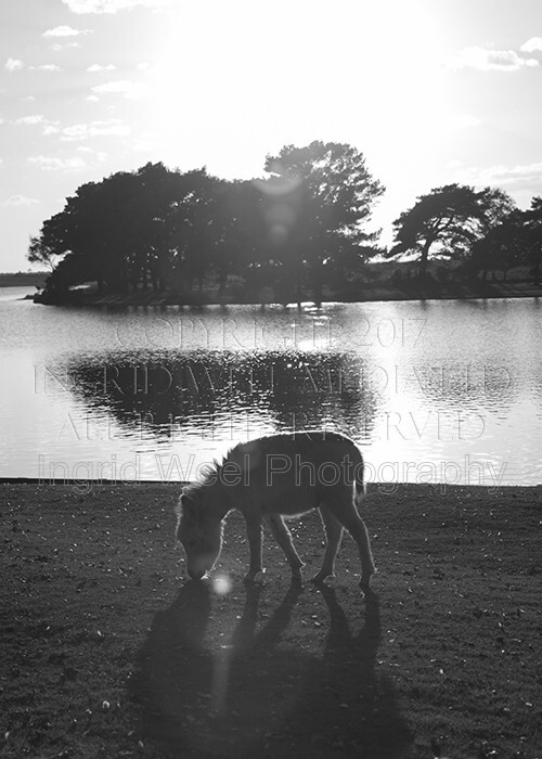IWM9135 