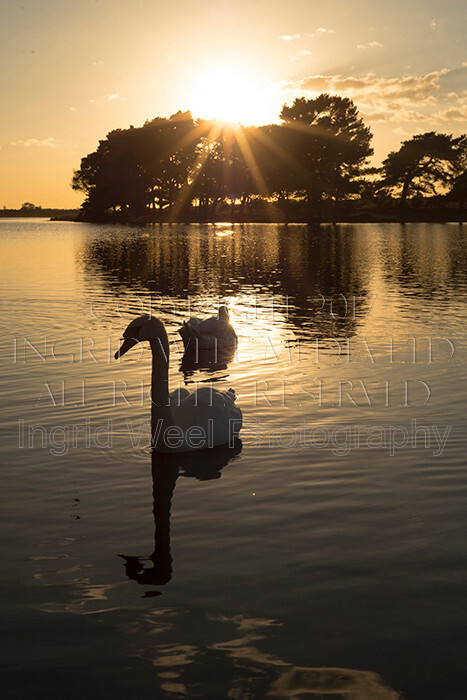IWM9192 