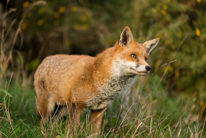 IWM2889 