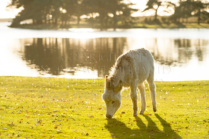 IWM9069 