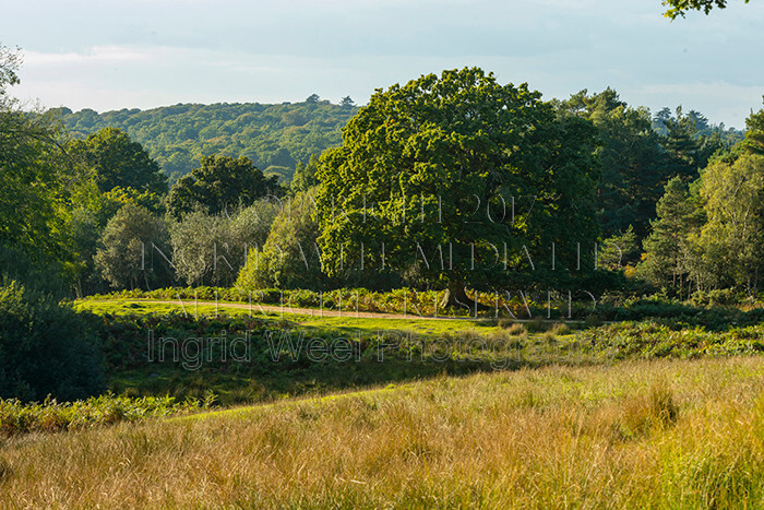 IWM9050 