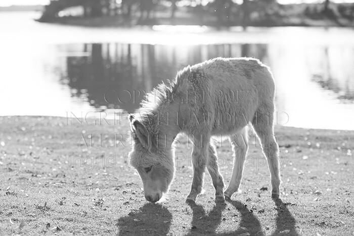 IWM9072 
